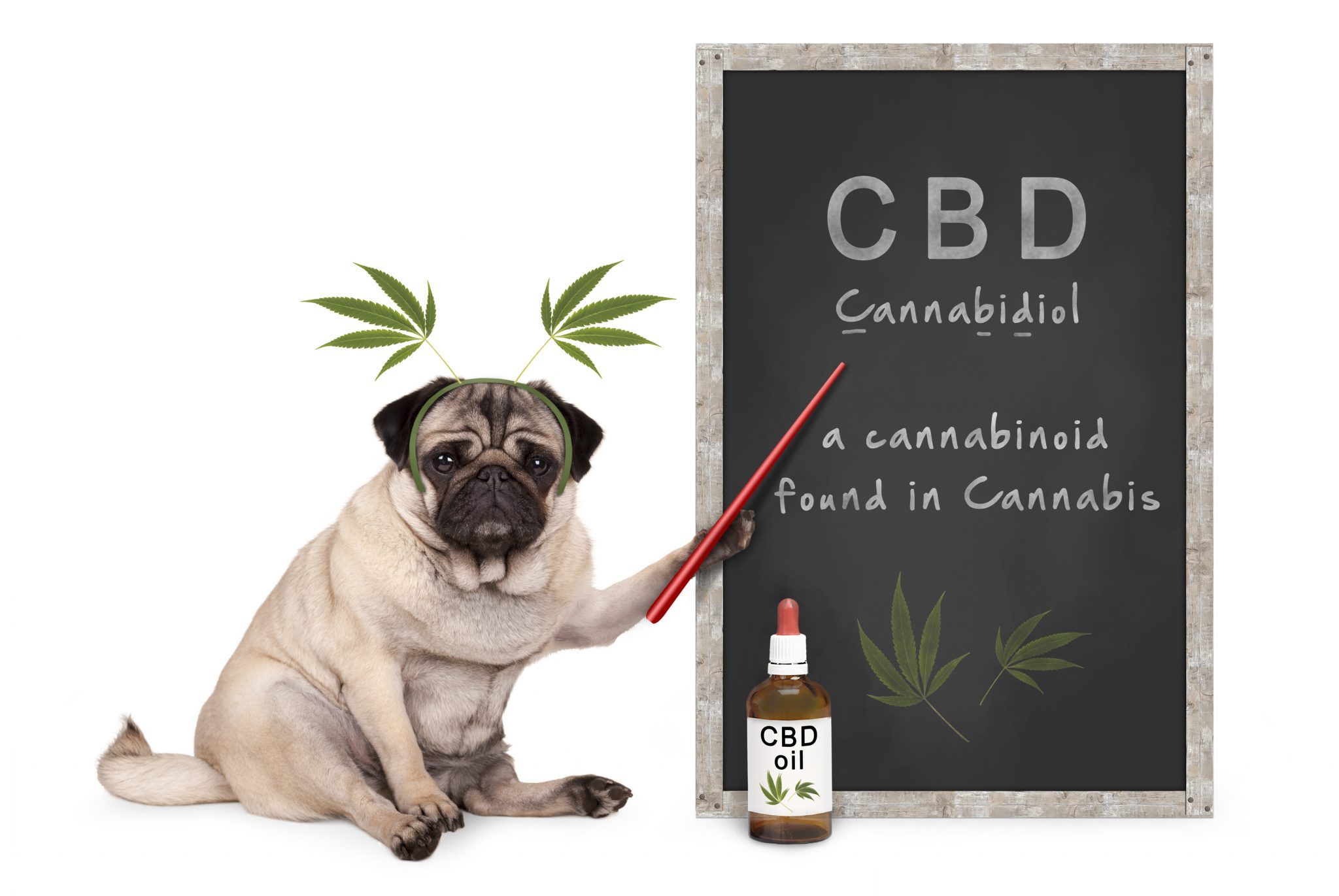 6 Benefits of CBD Oil for Dogs