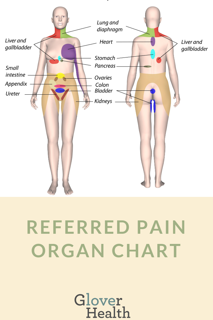 Referred pain organ chart