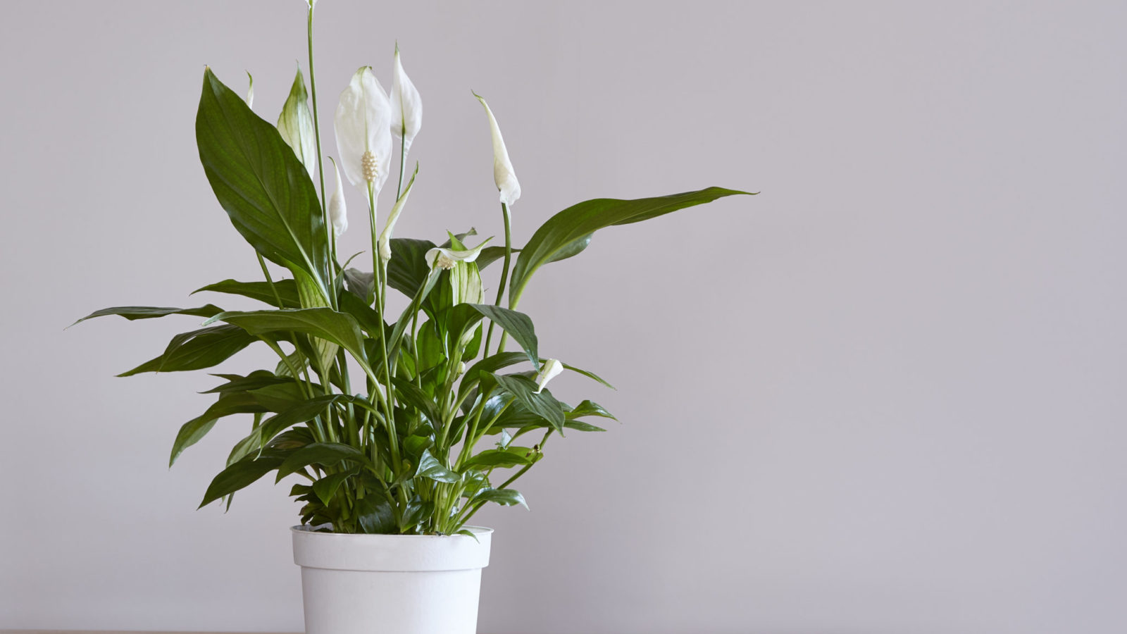 House Plants That Improve Indoor Air Quality