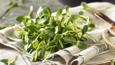 The Benefits of Sunflower Microgreens and Other Microgreens